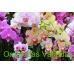 Orquidea 2 Varas con cubre macetas